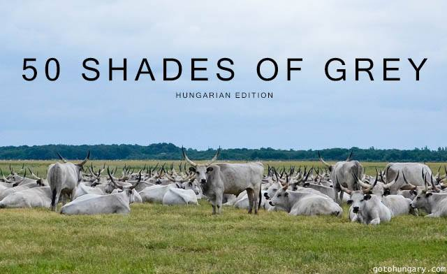 50 shades of grey Hungary